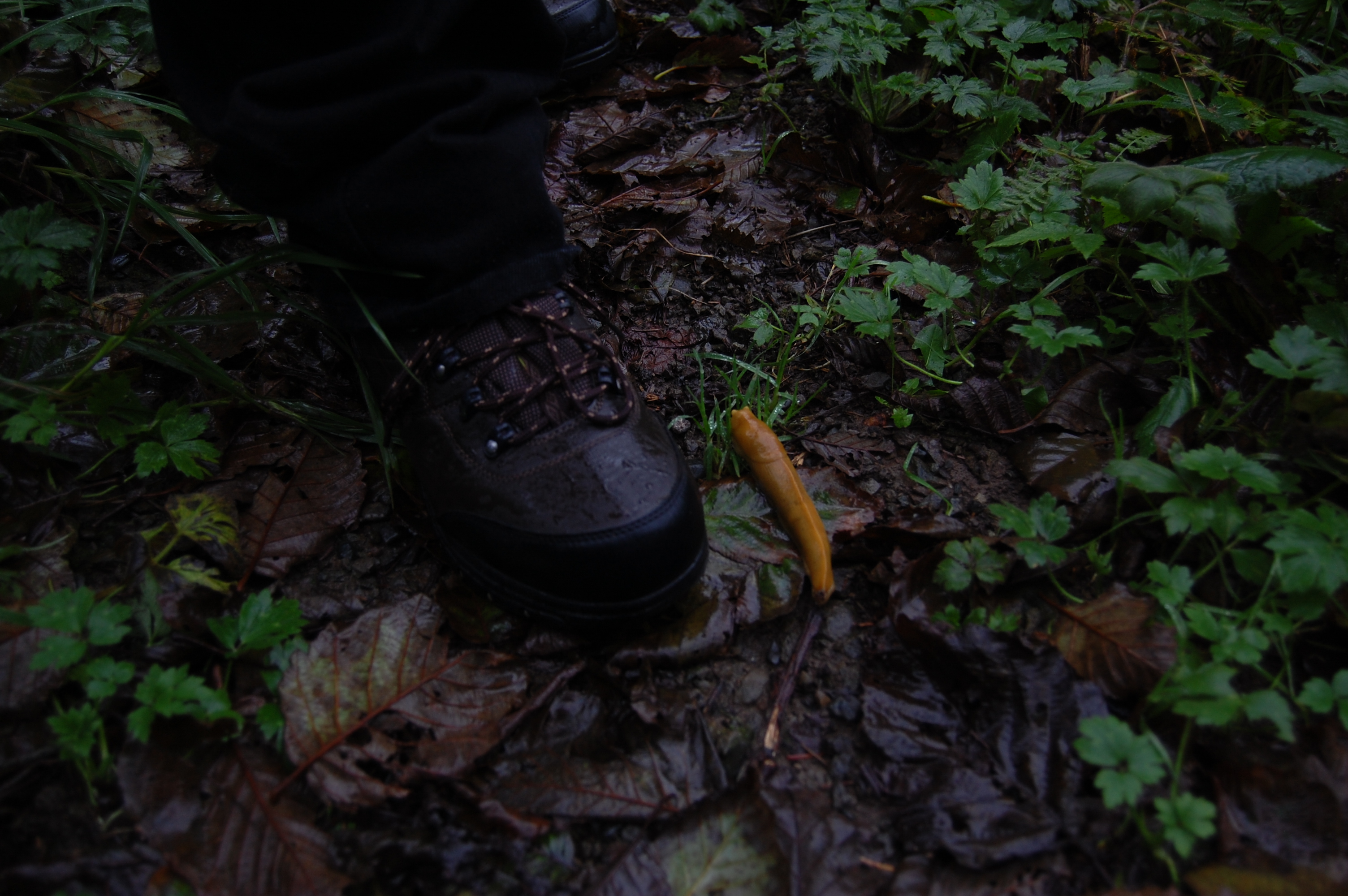Banana slug for scale