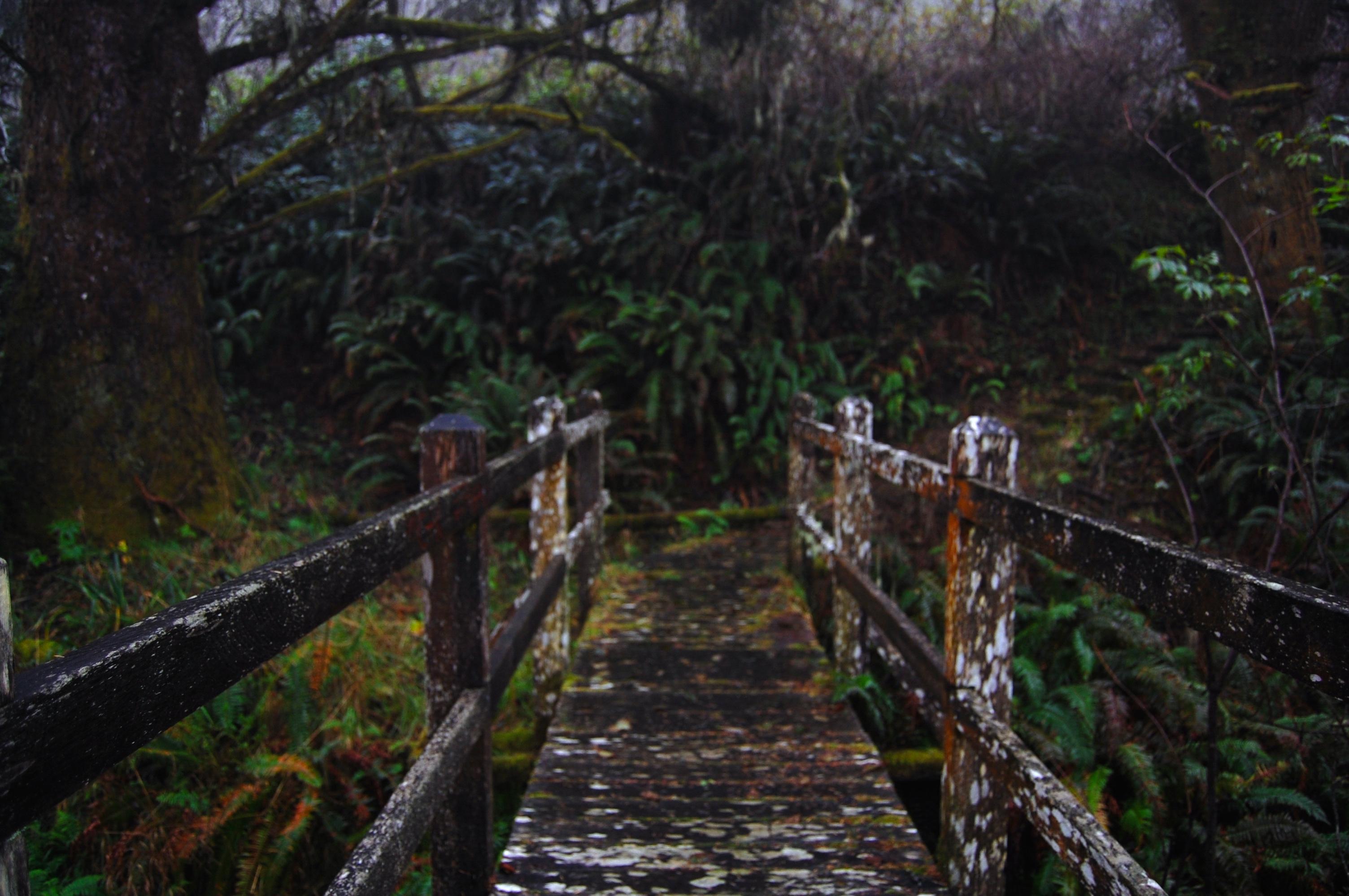 Bridge and ferns