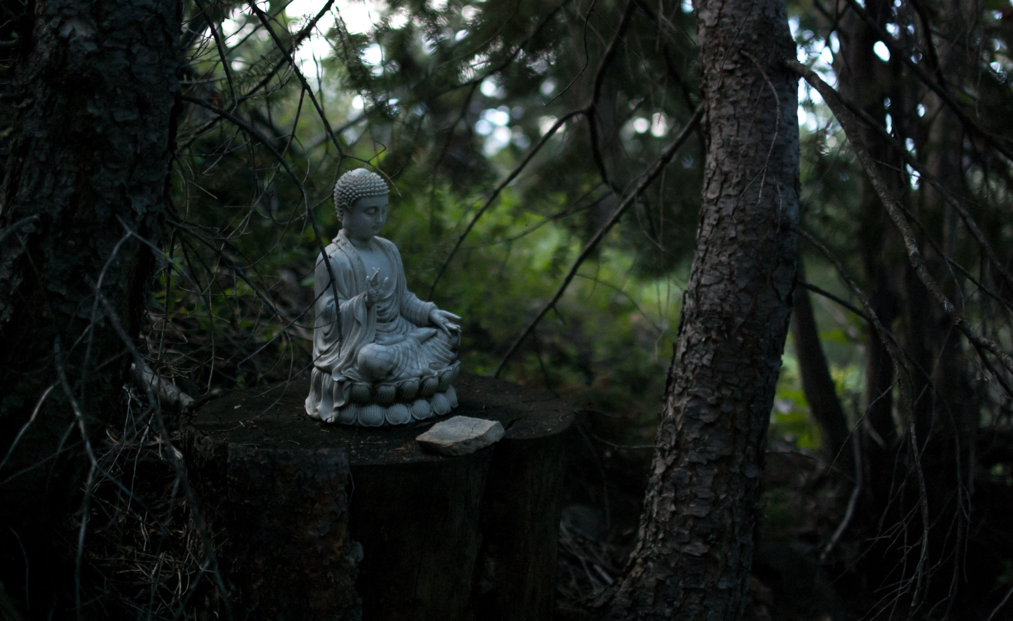Buddha statue surrounded by trees